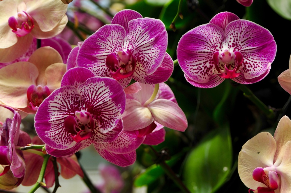 Orchids at Hong Kong Botanical Gardens